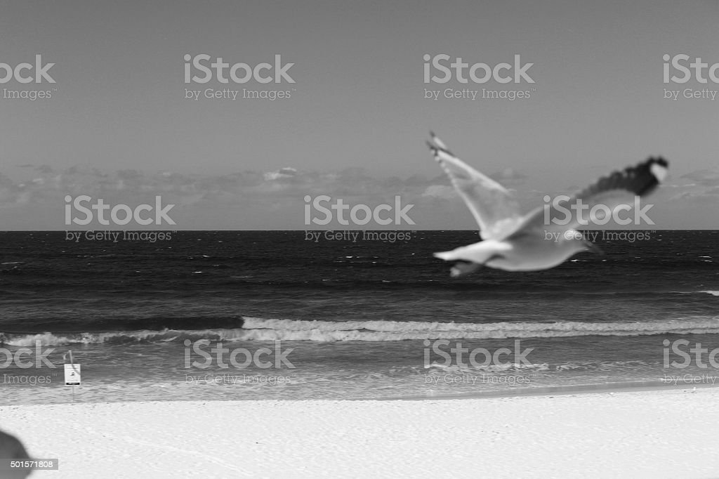 Black and white shot of bird flying at beach stock photo