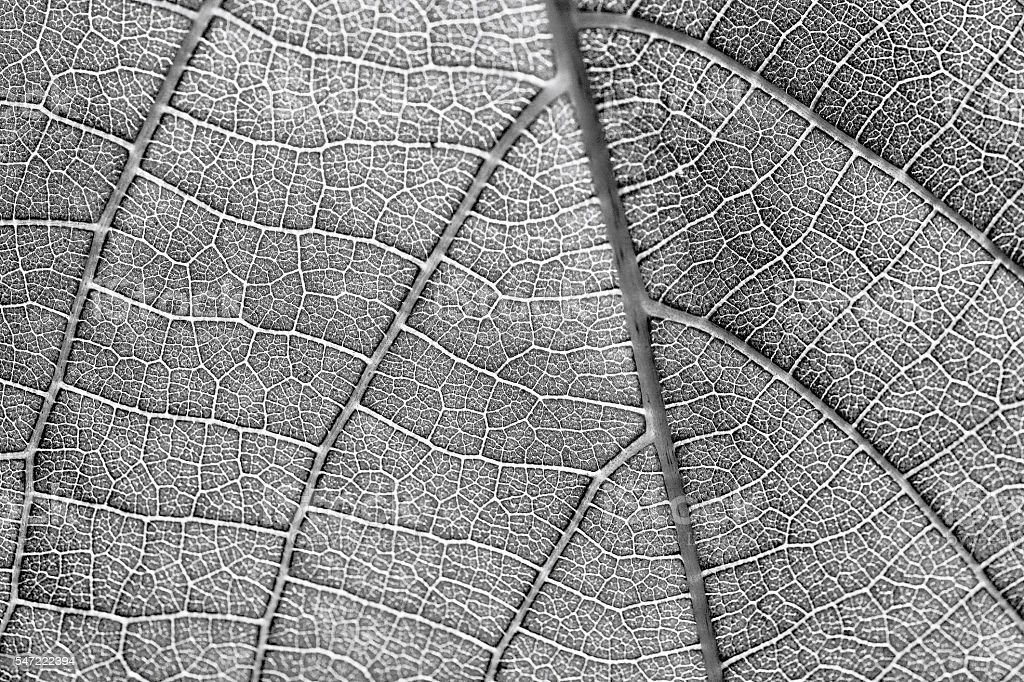 black and white texture more noise stock photo