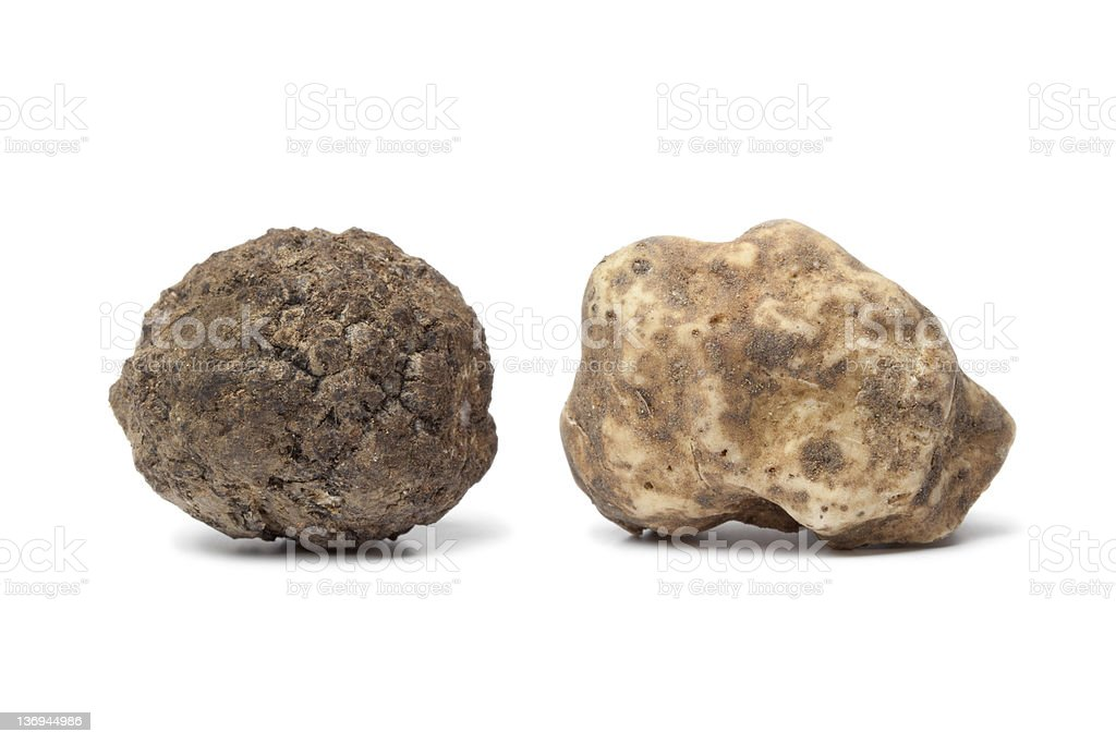 Black and white truffle stock photo