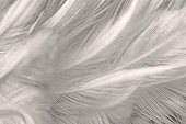 Black and white vintage color trends chicken feather texture background