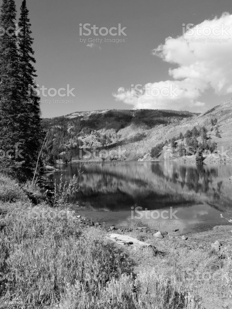 Black and White Wilderness stock photo