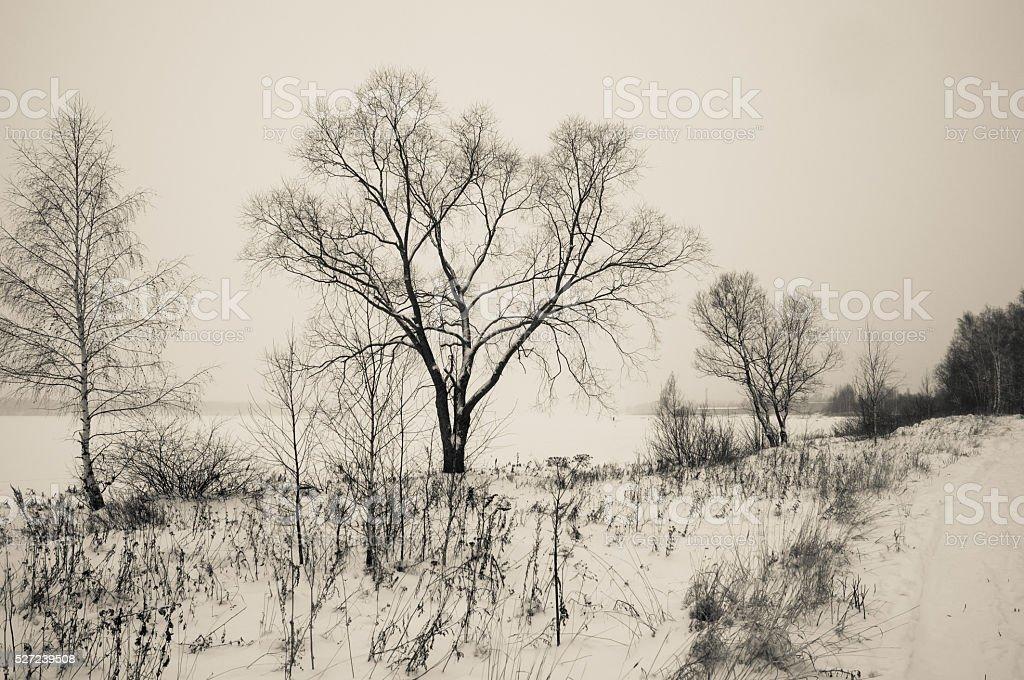 Black and white winter landscape stock photo