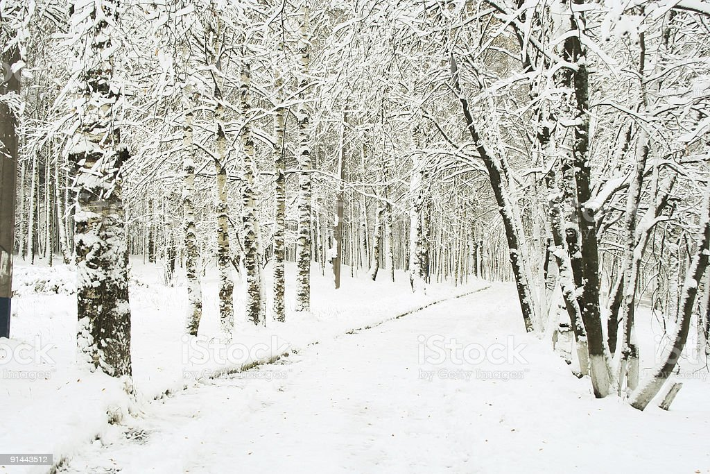 Black and white wintery scene of a forest covered in snow royalty-free stock photo