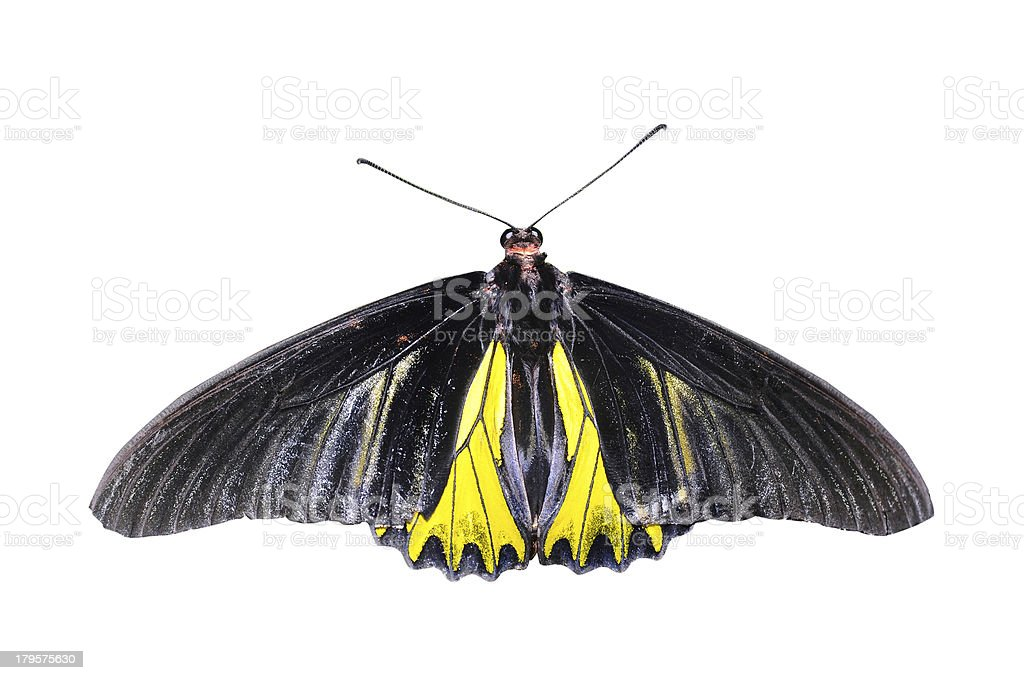 Black and yellow butterfly on isolated white background stock photo