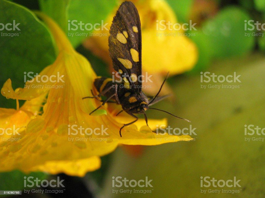 Black and yellow stock photo
