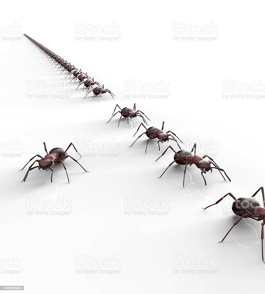 black ants isolated on a white background stock photo