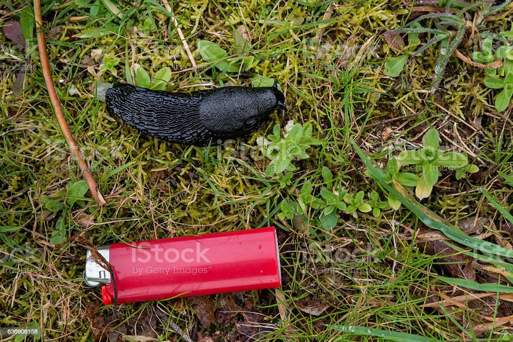 Black ater arion size comparison lighter stock photo