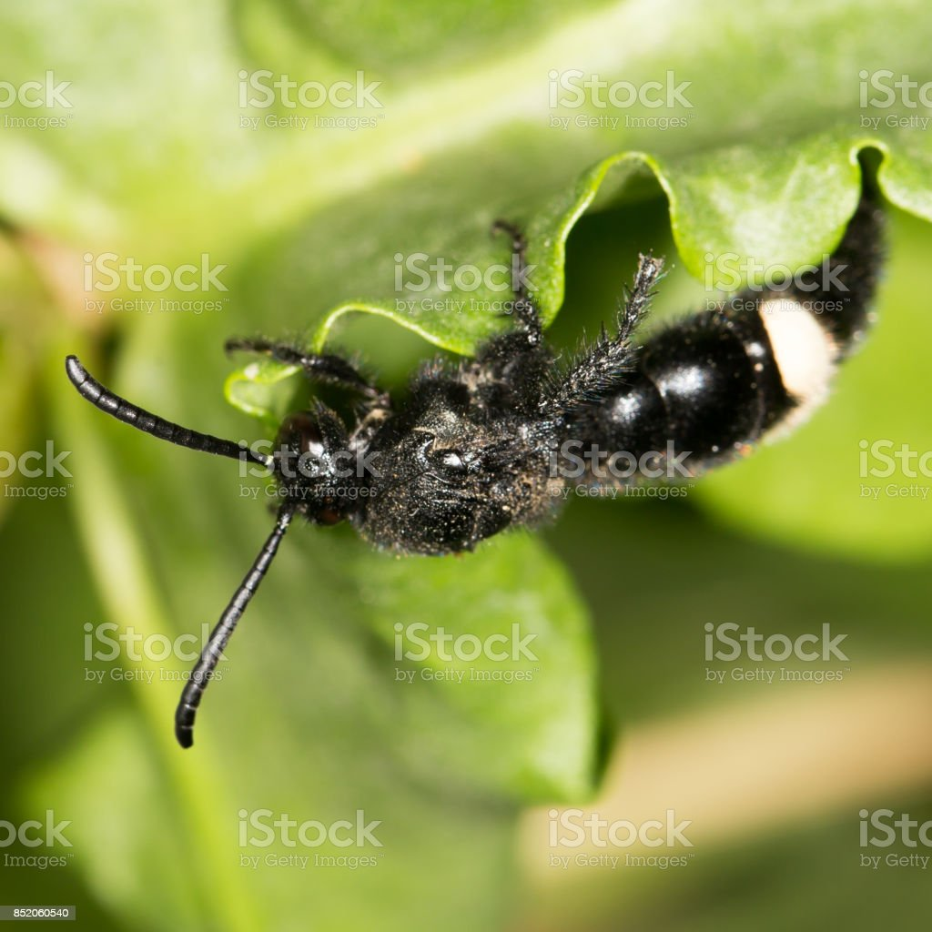 black bee on nature. close-up stock photo