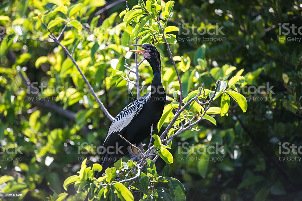 Black Bird in Tree stock photo