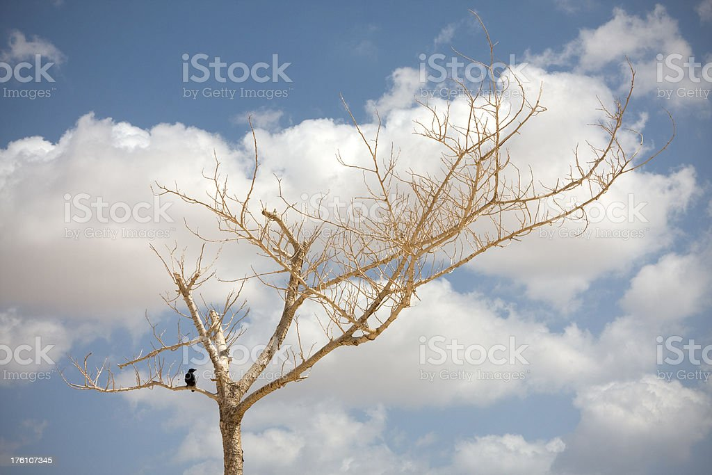 Black Bird on Dead Tree Against Clouds in Sky stock photo