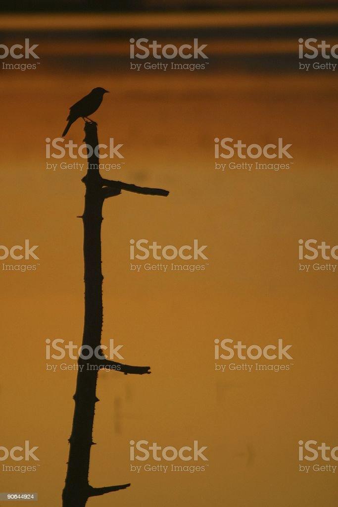 Black bird. stock photo