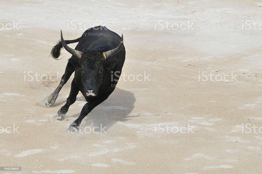 Black bull charging stock photo