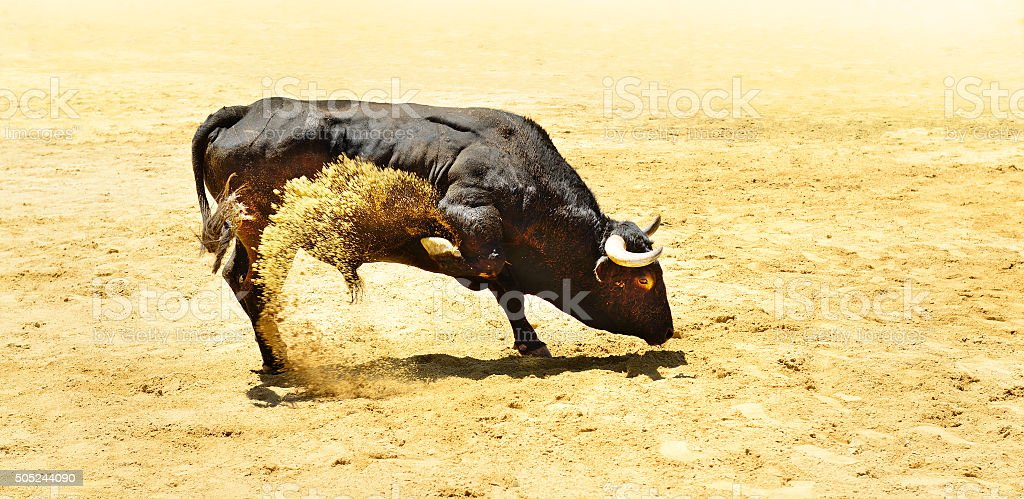 Black bull stock photo