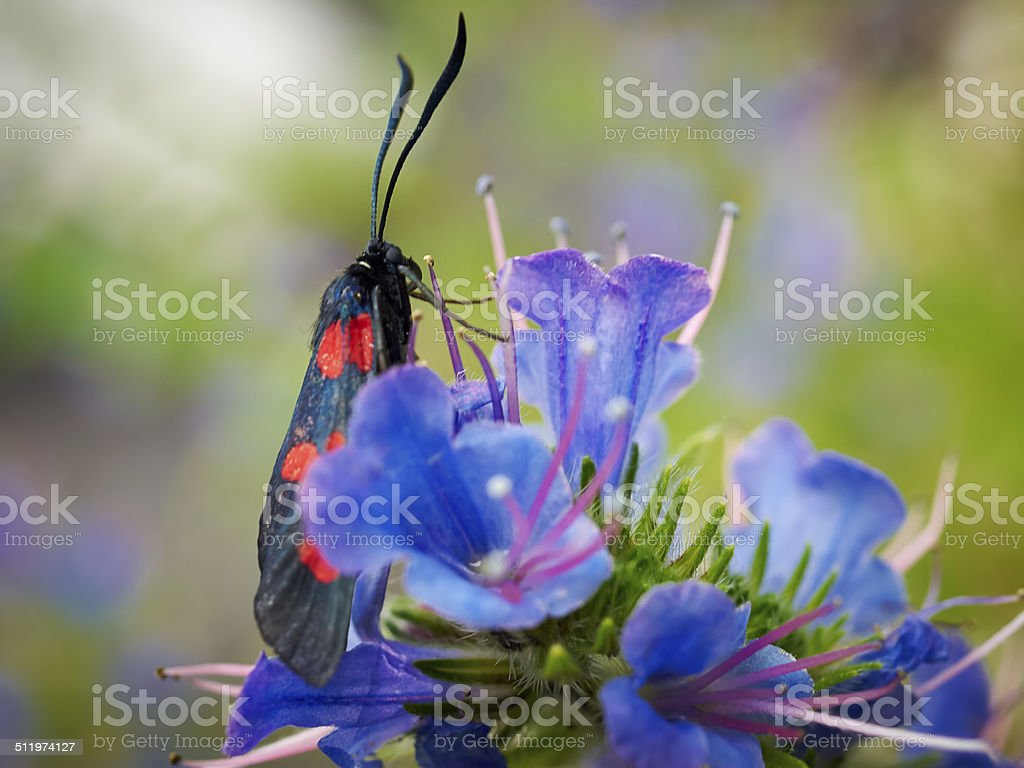 black butterfly stock photo