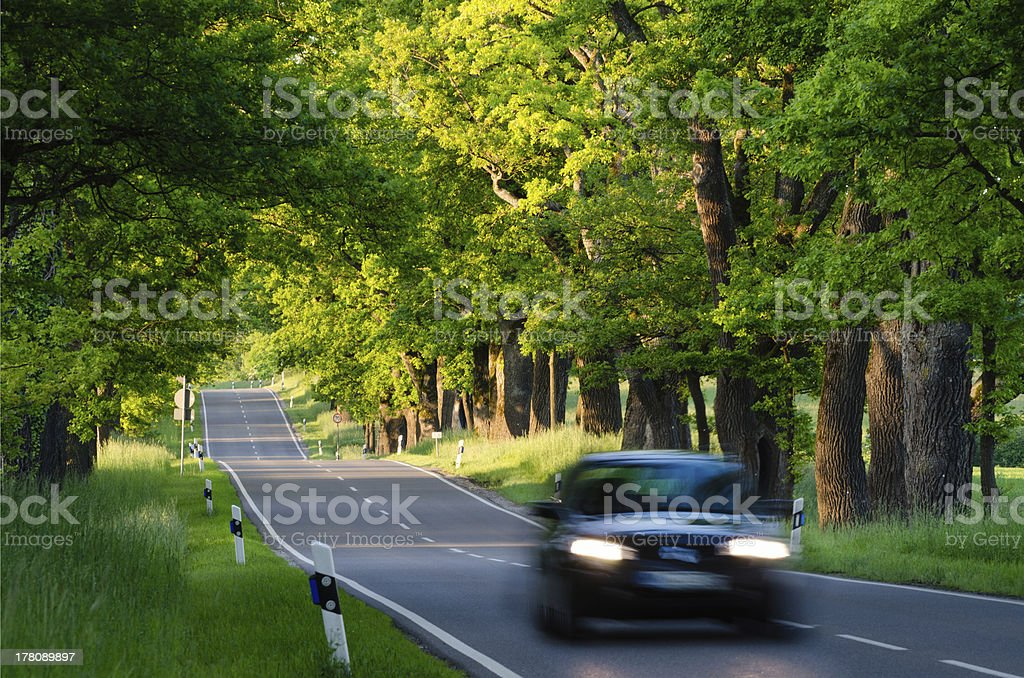 Black car on Country Road with Oak Trees stock photo