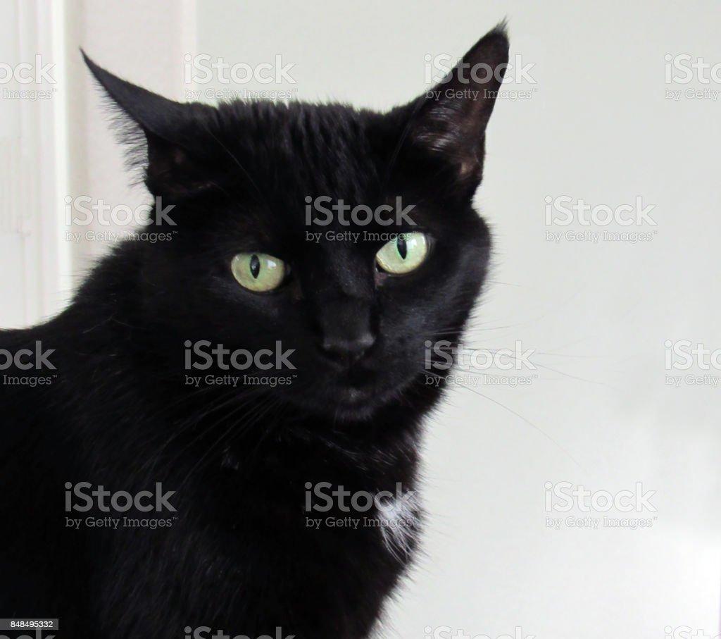 Black Cat 2 stock photo