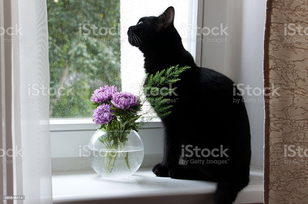 Black cat and a vase on the window. stock photo