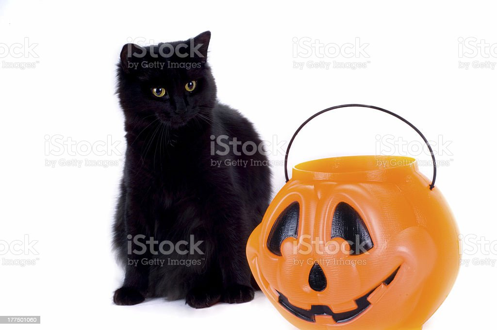 Black Cat and Candy Pumpkin. royalty-free stock photo
