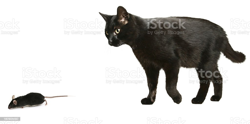Black Cat and Mouse royalty-free stock photo