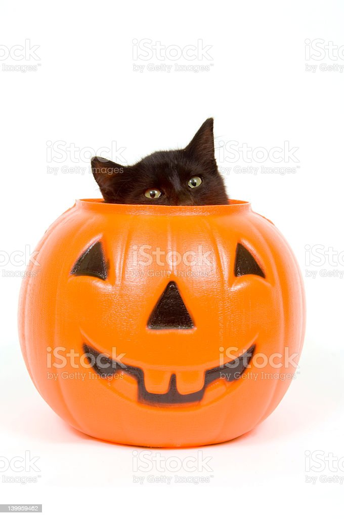 Black cat and plastic pumpkin - halloween royalty-free stock photo