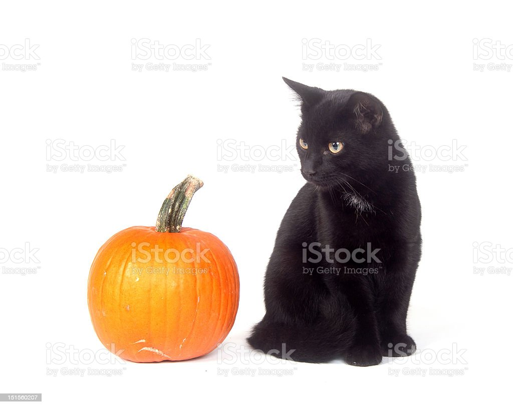 Black cat and pumpkin stock photo