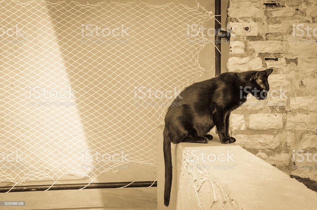 black cat animal stock photo