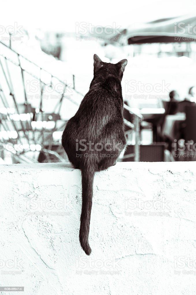 black cat back view stock photo