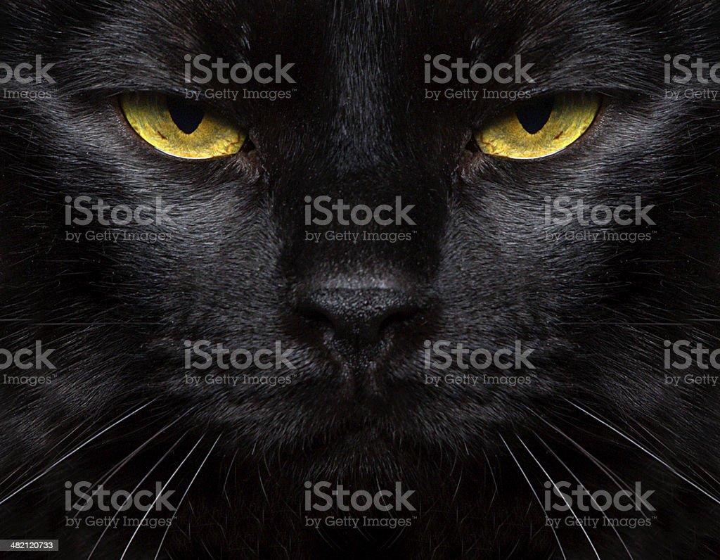 Black Cat Closeup stock photo