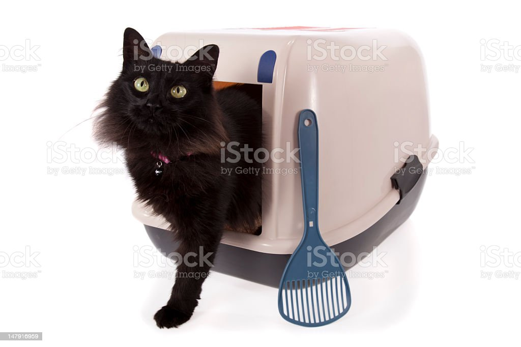 Black cat coming out of a covered litter box stock photo