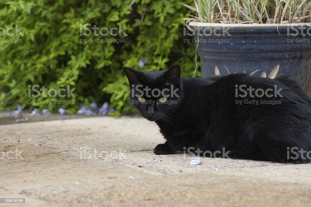 Black Cat - crouching on outdoor patio royalty-free stock photo