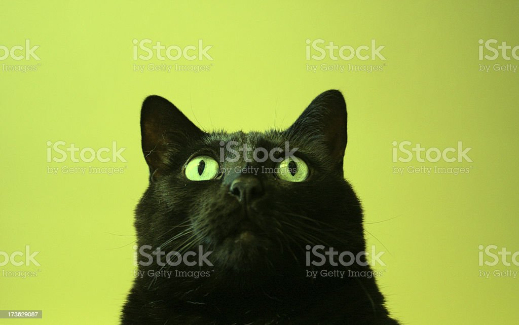 Black Cat Curiosity, Green Background royalty-free stock photo