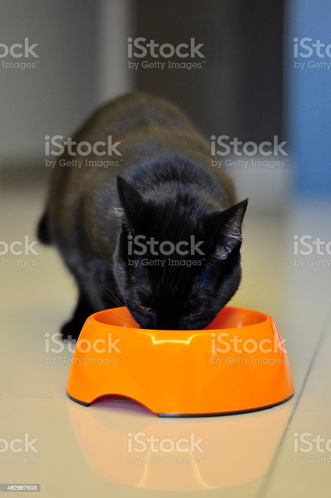 Black cat eating from an orange bowl stock photo