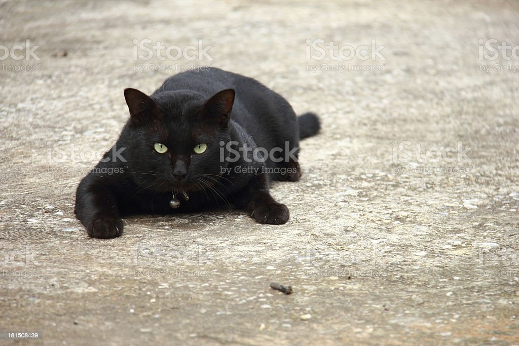 Black Cat Eyes royalty-free stock photo