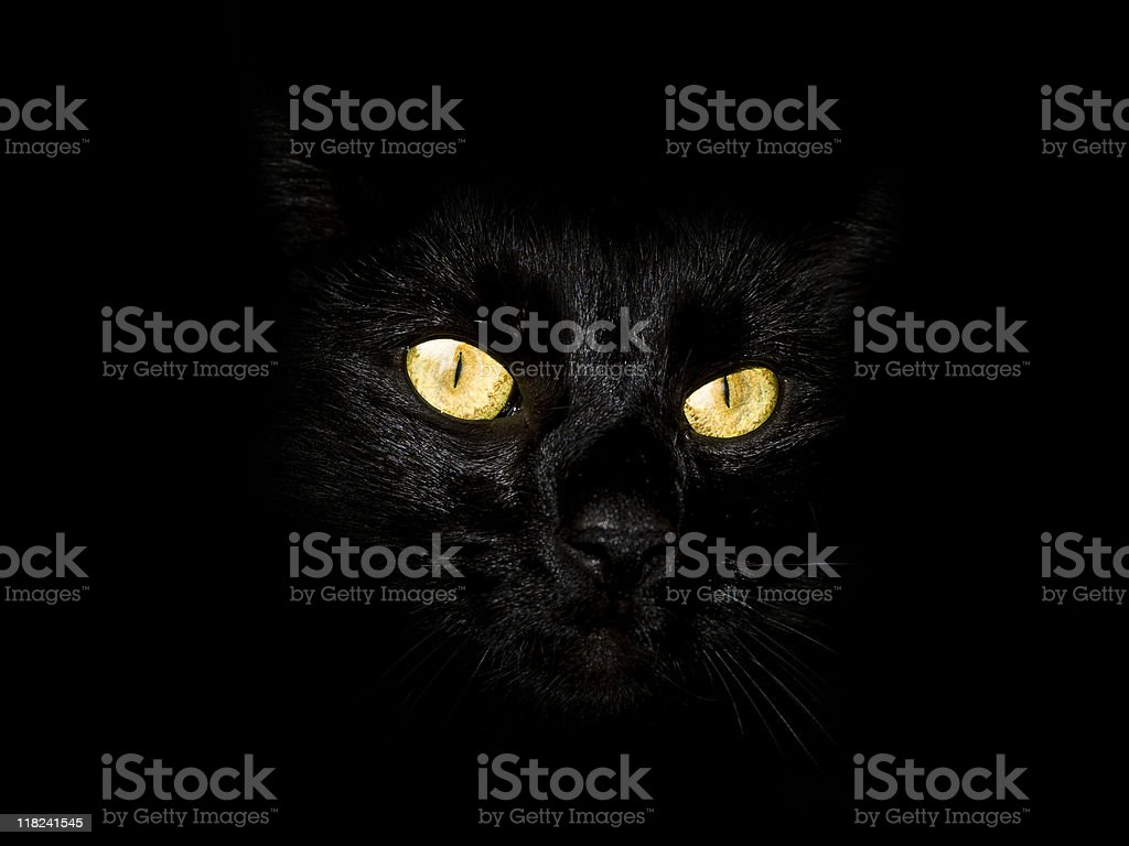 black cat eyes yellow stock photo