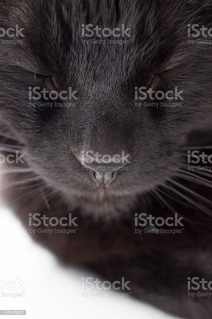 Black Cat Face Close Up stock photo