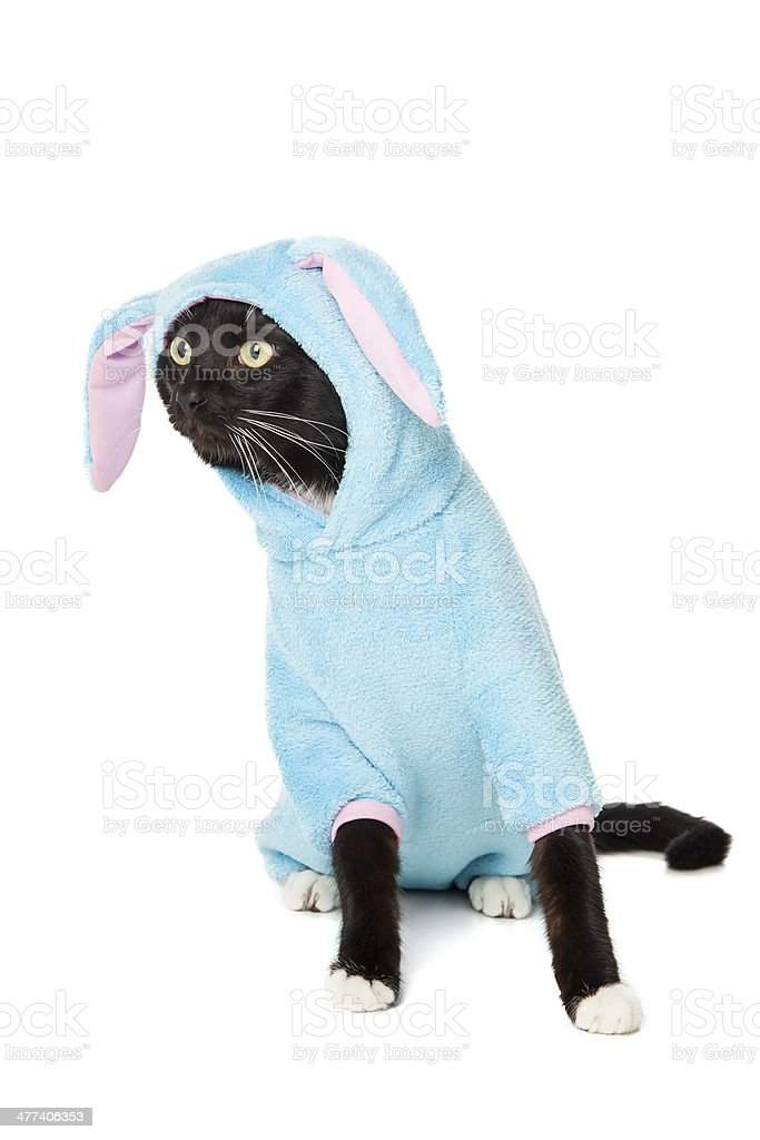 black cat in a bunny suit royalty-free stock photo