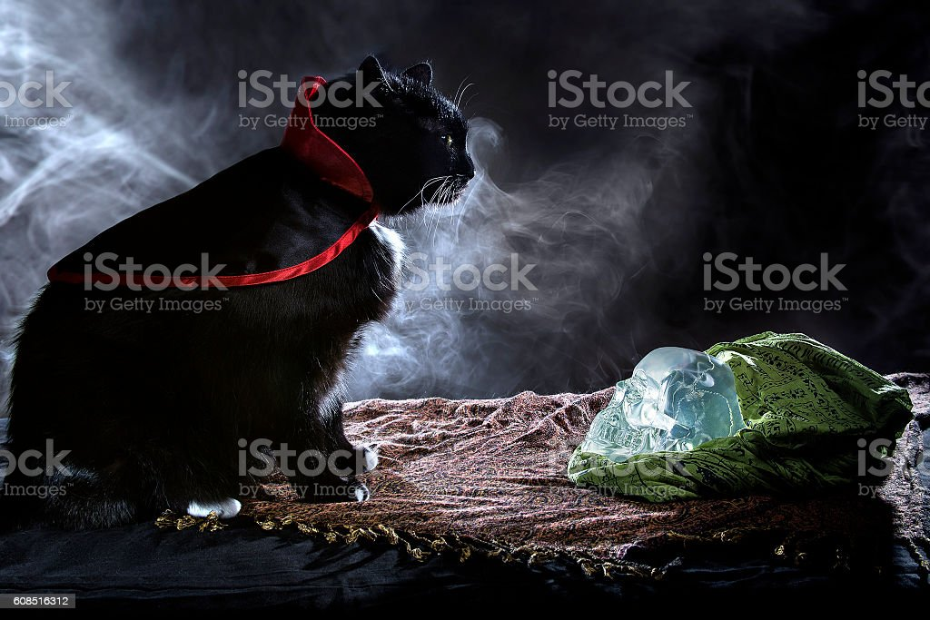 Black Cat in a Costume on Halloween stock photo