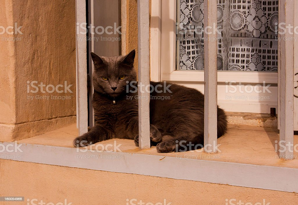 Black cat in a windowframe stock photo