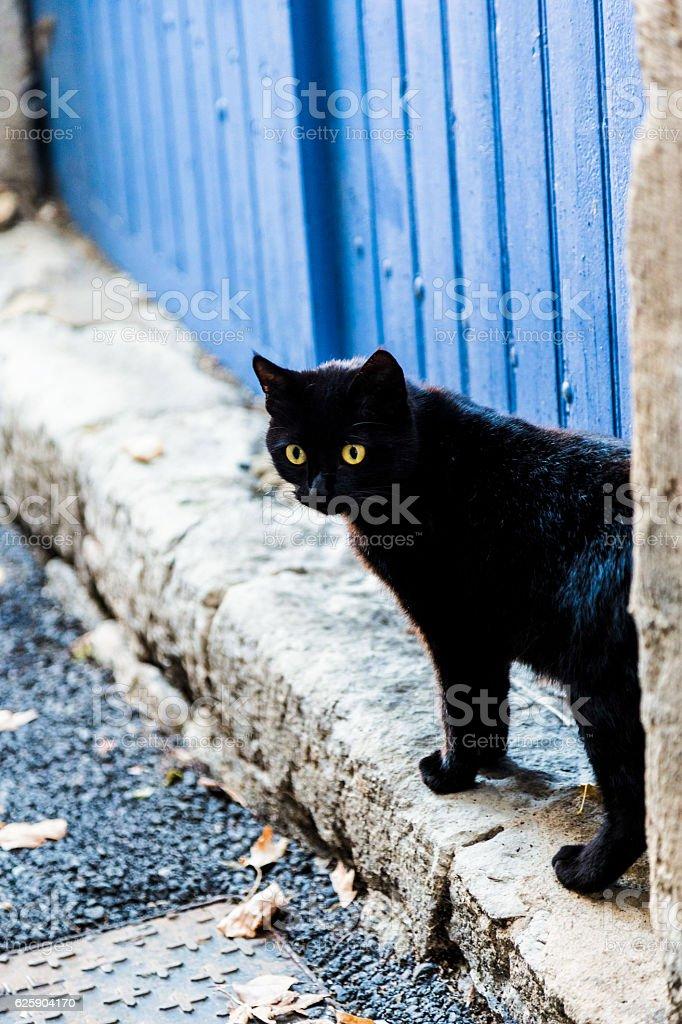 black cat in alley stock photo