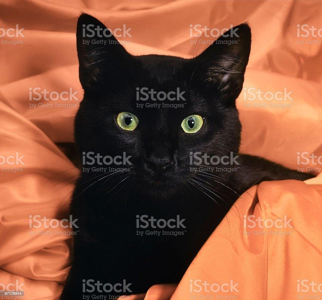 Black Cat in orange satin royalty-free stock photo