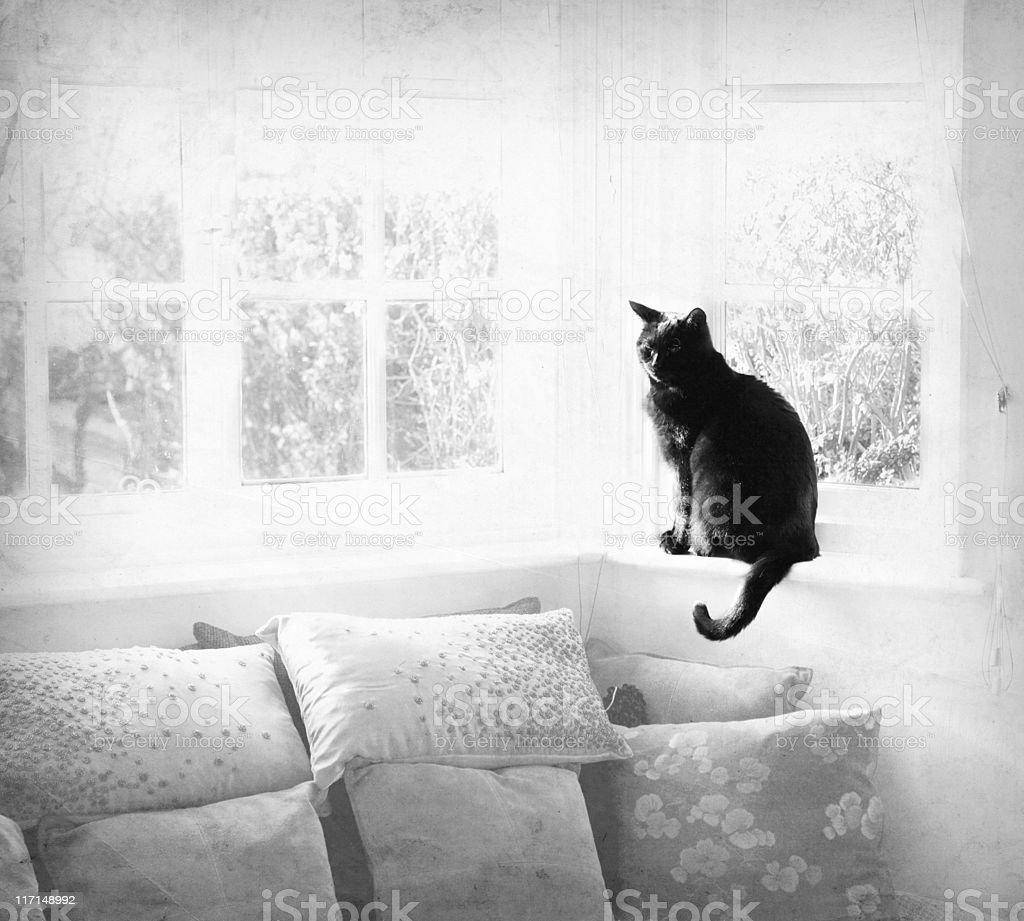Black Cat in Sunshine stock photo