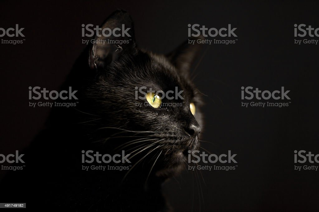 Black Cat In The Dark stock photo