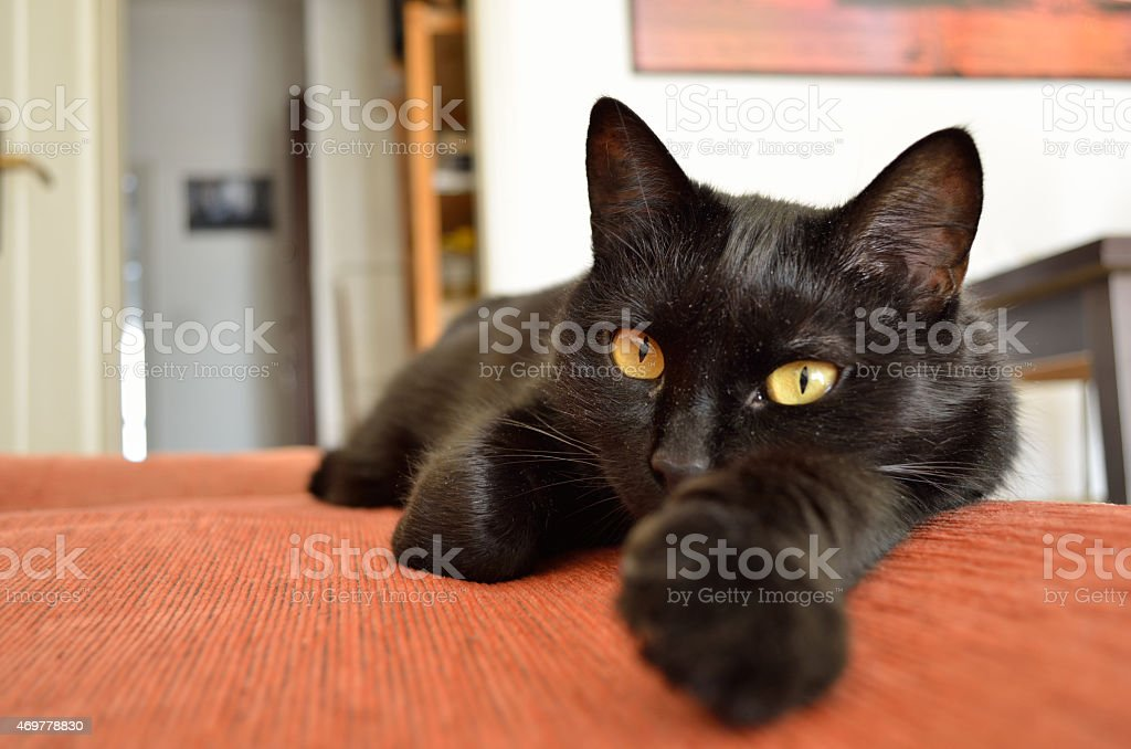 Black cat  in the house royalty-free stock photo