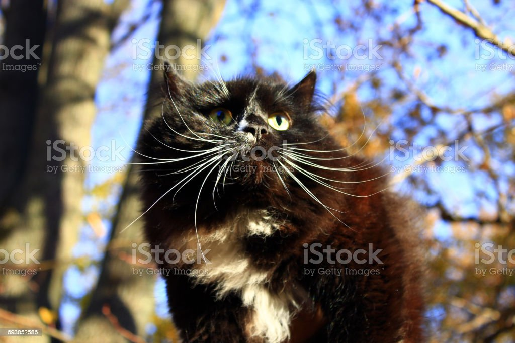 black cat is very frightened stock photo