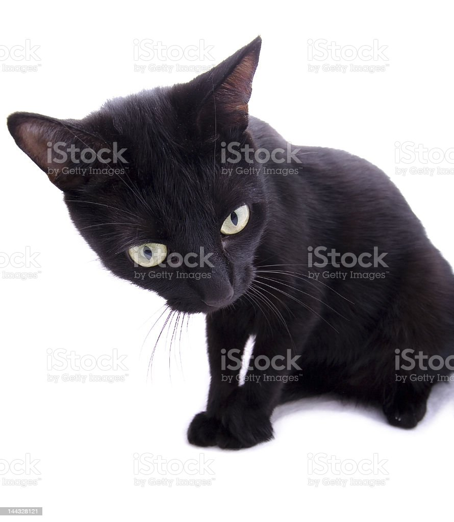 Black cat isolated royalty-free stock photo
