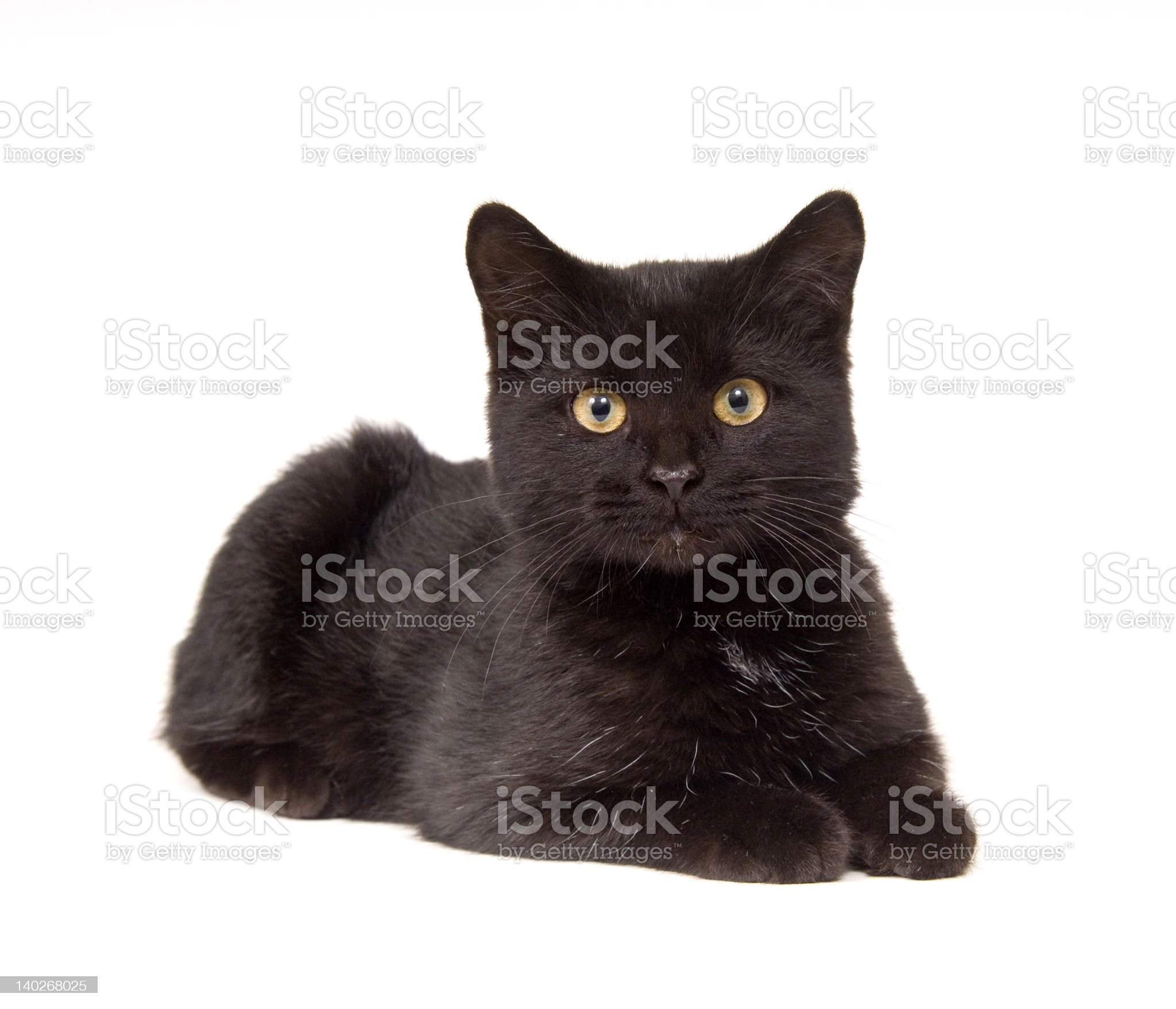 black cat laying down and looking straight ahead royalty-free stock photo