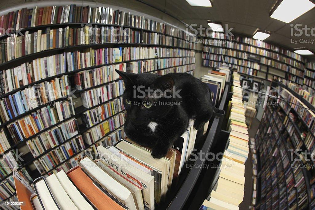 Black Cat Lays on Bookshelf stock photo