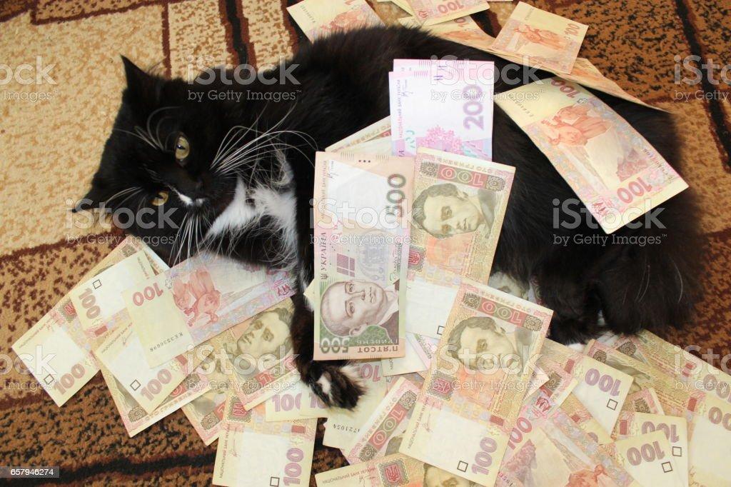 black cat lays on the carpet with Ukrainian money stock photo