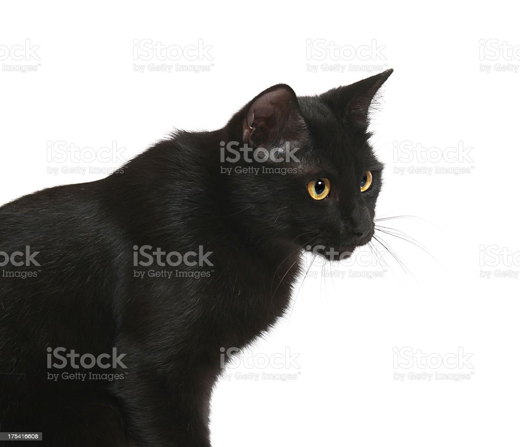 Black cat looking stock photo