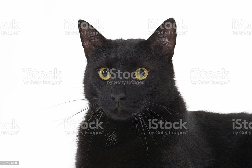 black cat lying down royalty-free stock photo